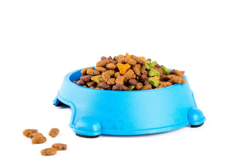 Наилучшая ханка ради ручных животных по купить корм собака мнению ветеринаров возможно специалистов